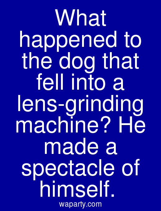 What happened to the dog that fell into a lens-grinding machine? He made a spectacle of himself.