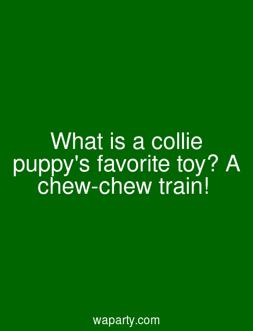 What is a collie puppys favorite toy? A chew-chew train!