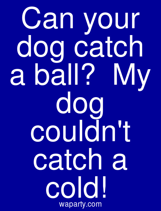 Can your dog catch a ball?  My dog couldnt catch a cold!