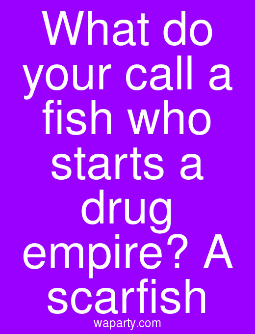 What do your call a fish who starts a drug empire? A scarfish