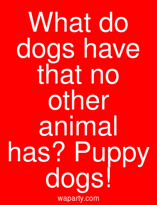What do dogs have that no other animal has? Puppy dogs!