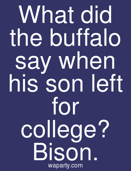 What did the buffalo say when his son left for college? Bison.