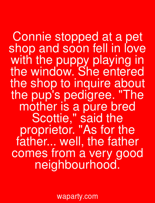 Connie stopped at a pet shop and soon fell in love with the puppy playing in the window. She entered the shop to inquire about the pups pedigree. The mother is a pure bred Scottie, said the proprietor. As for the father... well, the father comes from a very good neighbourhood.