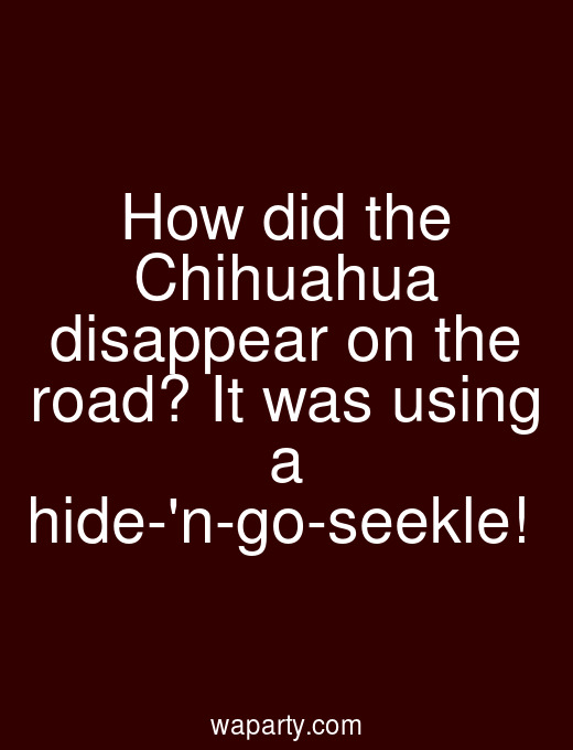 How did the Chihuahua disappear on the road? It was using a hide-n-go-seekle!