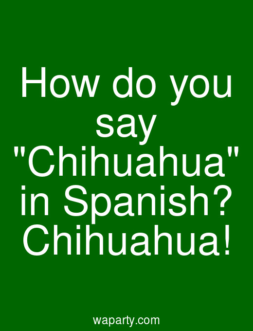 How do you say Chihuahua in Spanish? Chihuahua!