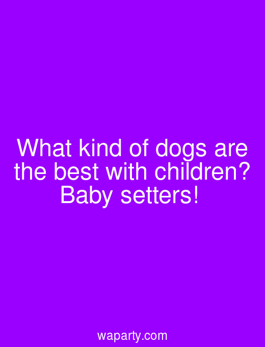 What kind of dogs are the best with children? Baby setters!