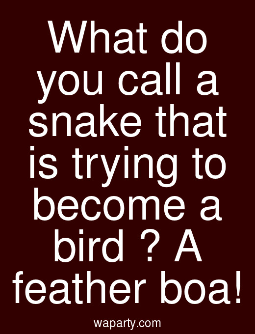 What do you call a snake that is trying to become a bird ? A feather boa!