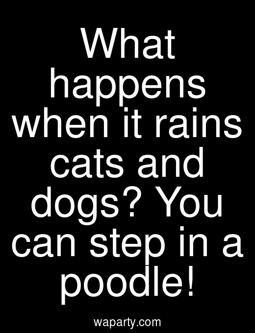 What happens when it rains cats and dogs? You can step in a poodle!
