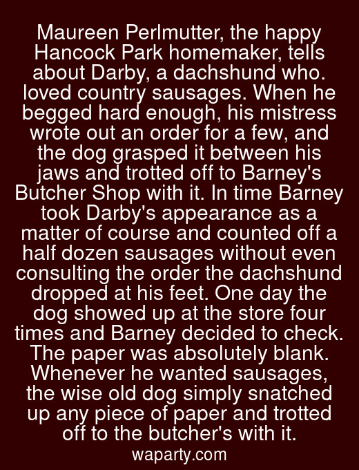 Maureen Perlmutter, the happy Hancock Park homemaker, tells about Darby, a dachshund who. loved country sausages. When he begged hard enough, his mistress wrote out an order for a few, and the dog grasped it between his jaws and trotted off to Barneys Butcher Shop with it. In time Barney took Darbys appearance as a matter of course and counted off a half dozen sausages without even consulting the order the dachshund dropped at his feet. One day the dog showed up at the store four times and Barney decided to check. The paper was absolutely blank. Whenever he wanted sausages, the wise old dog simply snatched up any piece of paper and trotted off to the butchers with it.