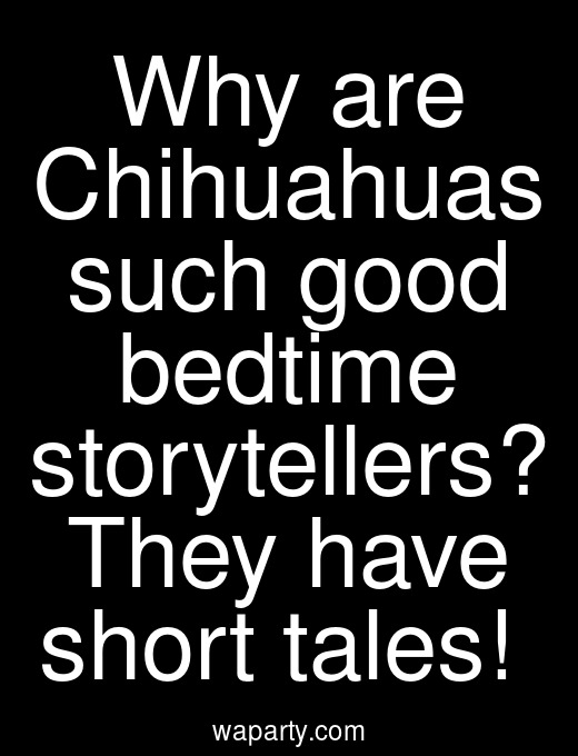 Why are Chihuahuas such good bedtime storytellers? They have short tales!