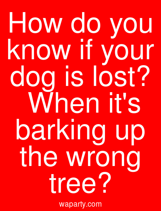 How do you know if your dog is lost?  When its barking up the wrong tree?