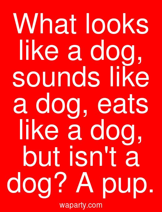 What looks like a dog, sounds like a dog, eats like a dog, but isnt a dog? A pup.