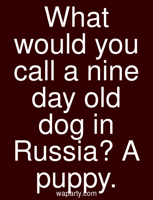 What would you call a nine day old dog in Russia? A puppy.