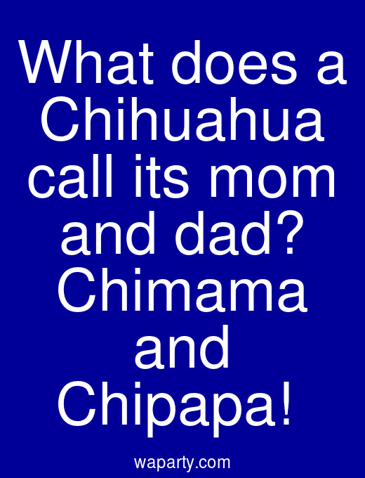 What does a Chihuahua call its mom and dad? Chimama and Chipapa!