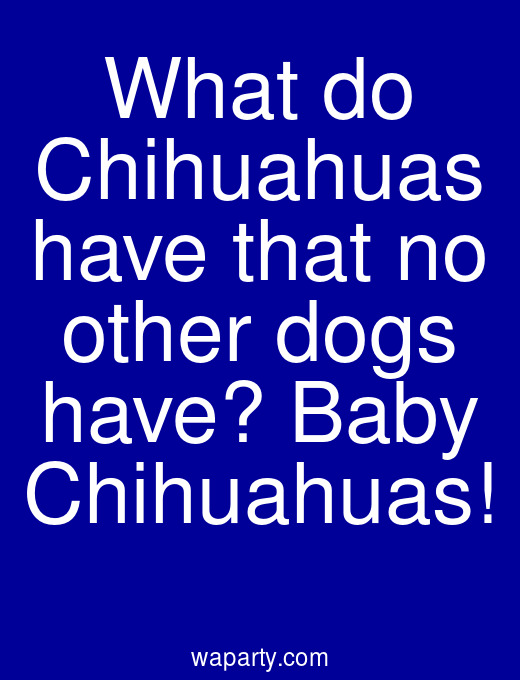 What do Chihuahuas have that no other dogs have? Baby Chihuahuas!