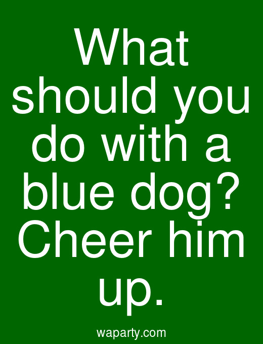 What should you do with a blue dog? Cheer him up.