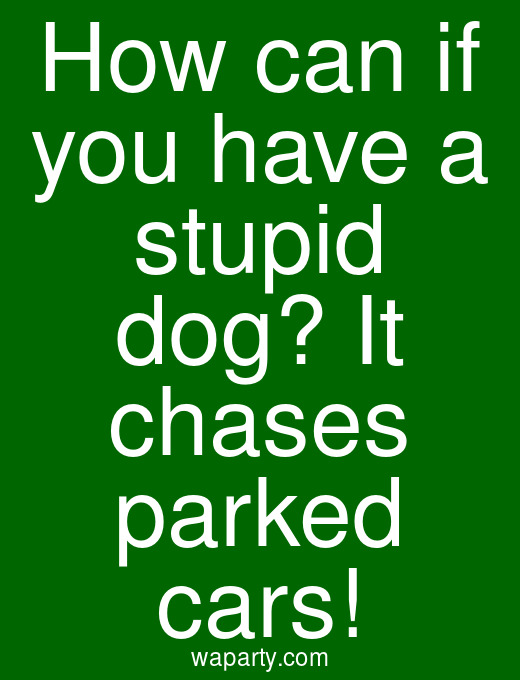 How can if you have a stupid dog? It chases parked cars!