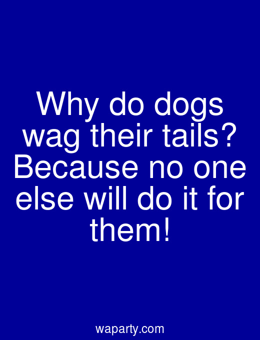 Why do dogs wag their tails? Because no one else will do it for them!