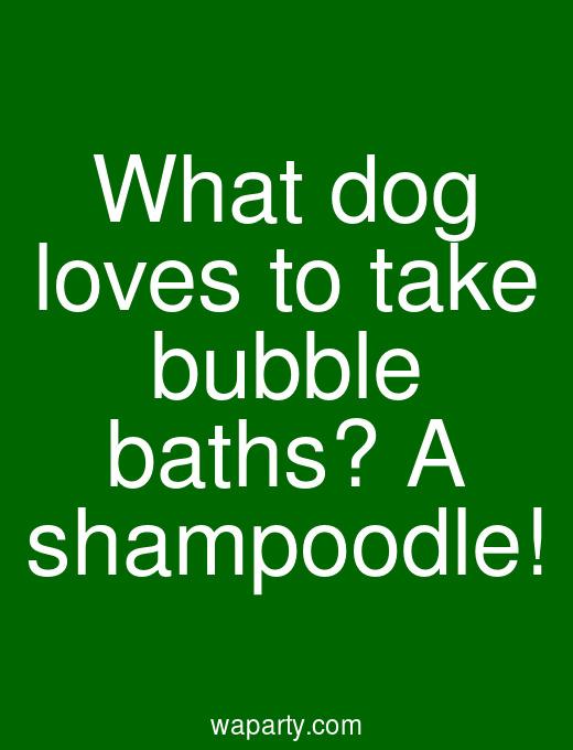 What dog loves to take bubble baths? A shampoodle!
