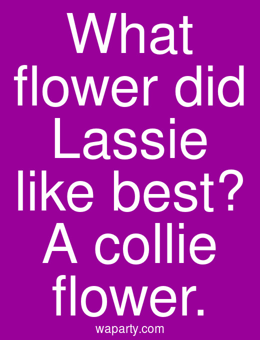 What flower did Lassie like best? A collie flower.