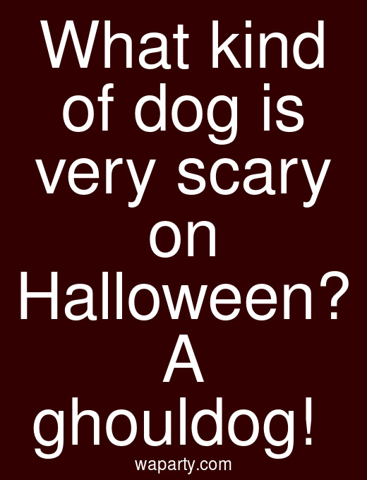 What kind of dog is very scary on Halloween? A ghouldog!