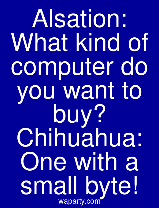 Alsation: What kind of computer do you want to buy? Chihuahua: One with a small byte!