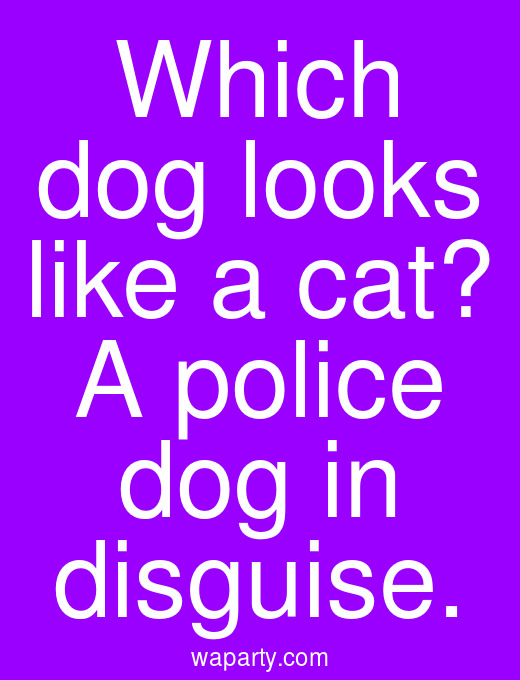 Which dog looks like a cat? A police dog in disguise.