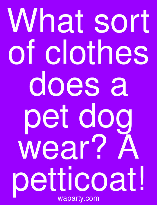 What sort of clothes does a pet dog wear? A petticoat!