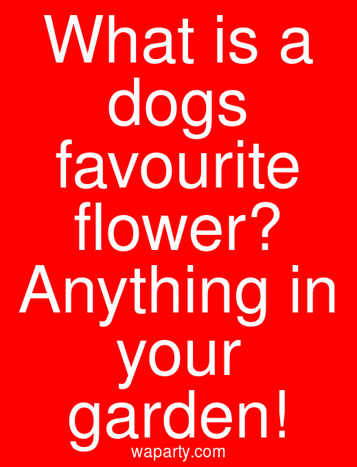 What is a dogs favourite flower? Anything in your garden!