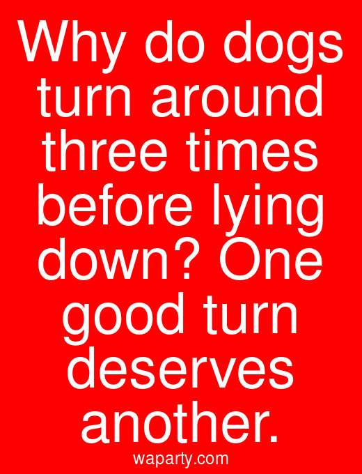 Why do dogs turn around three times before lying down? One good turn deserves another.