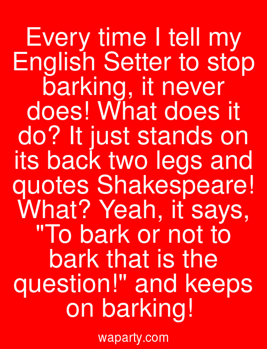 Every time I tell my English Setter to stop barking, it never does! What does it do? It just stands on its back two legs and quotes Shakespeare! What? Yeah, it says, To bark or not to bark that is the question! and keeps on barking!
