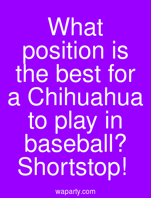 What position is the best for a Chihuahua to play in baseball? Shortstop!