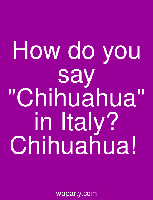 How do you say Chihuahua in Italy? Chihuahua!