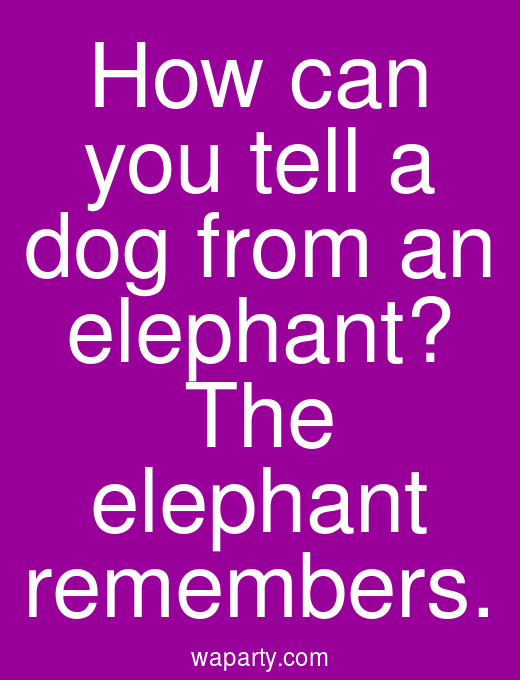 How can you tell a dog from an elephant? The elephant remembers.