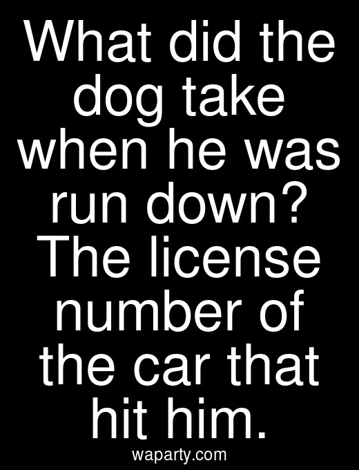 What did the dog take when he was run down? The license number of the car that hit him.