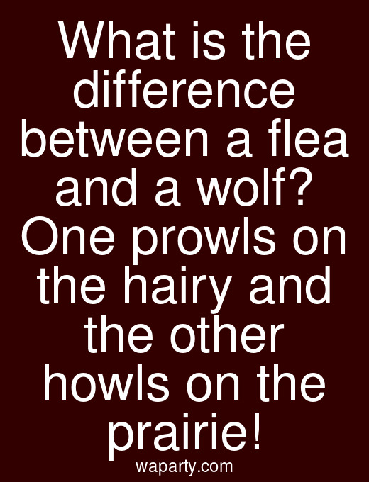 What is the difference between a flea and a wolf? One prowls on the hairy and the other howls on the prairie!