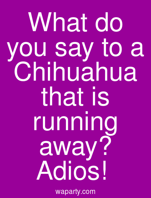 What do you say to a Chihuahua that is running away? Adios!