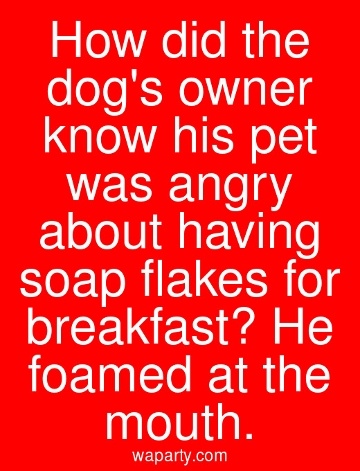 How did the dogs owner know his pet was angry about having soap flakes for breakfast? He foamed at the mouth.