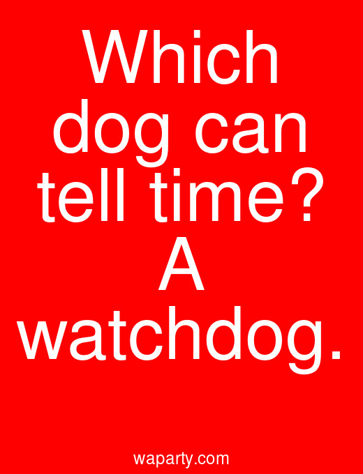 Which dog can tell time? A watchdog.