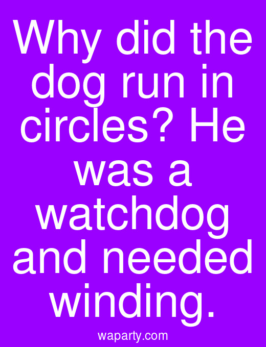 Why did the dog run in circles? He was a watchdog and needed winding.