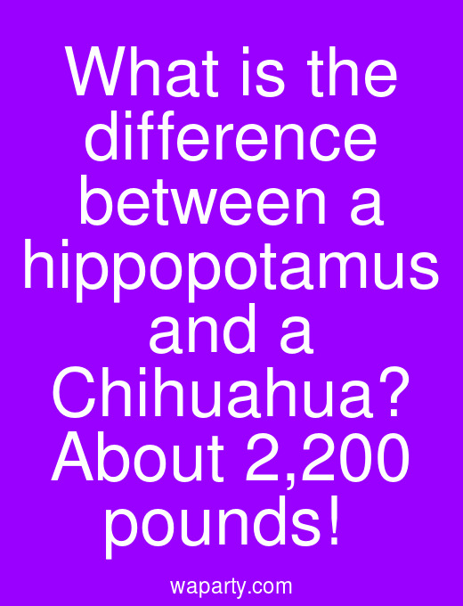 What is the difference between a hippopotamus and a Chihuahua? About 2,200 pounds!