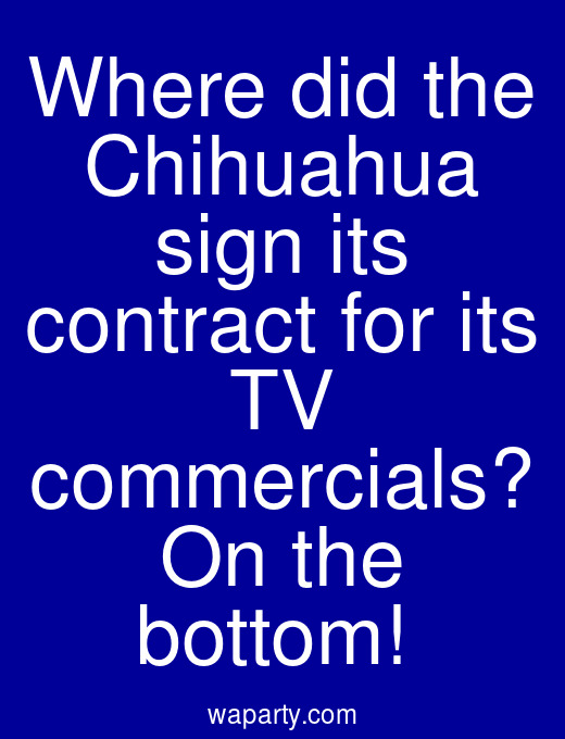 Where did the Chihuahua sign its contract for its TV commercials? On the bottom!