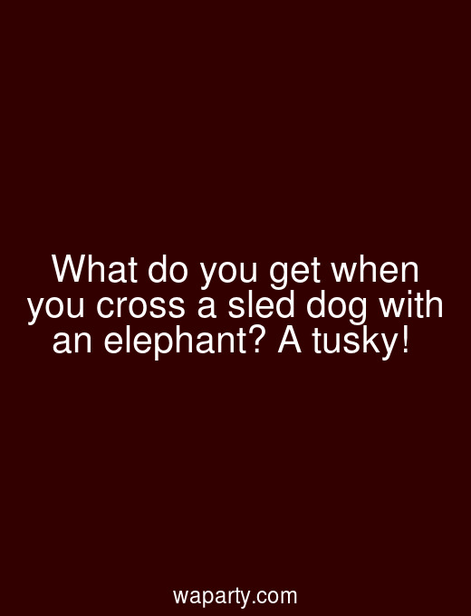 What do you get when you cross a sled dog with an elephant? A tusky!