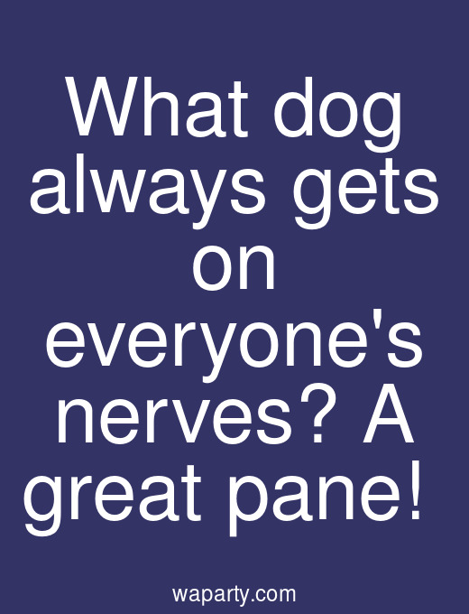 What dog always gets on everyones nerves? A great pane!