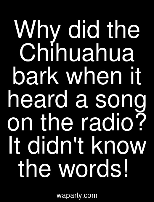 Why did the Chihuahua bark when it heard a song on the radio? It didnt know the words!