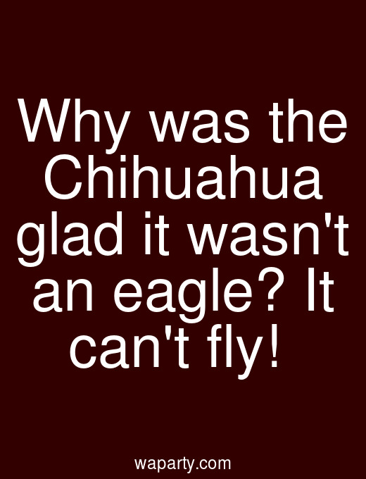 Why was the Chihuahua glad it wasnt an eagle? It cant fly!