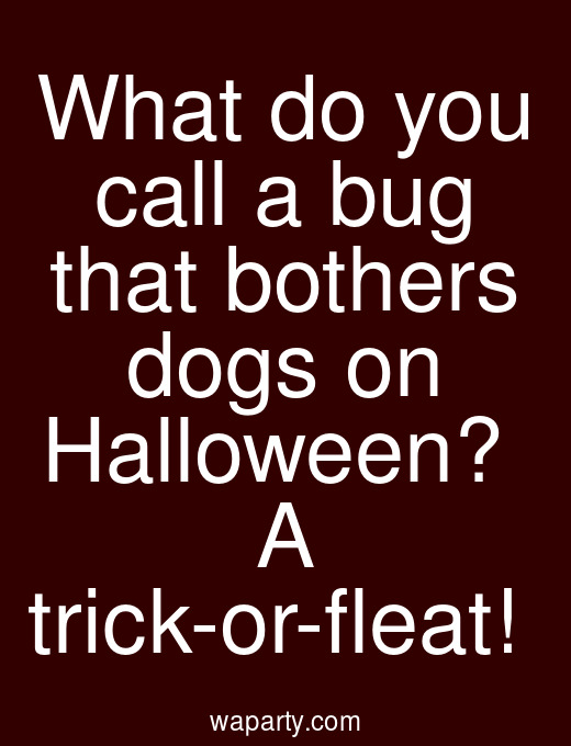 What do you call a bug that bothers dogs on Halloween?  A trick-or-fleat!
