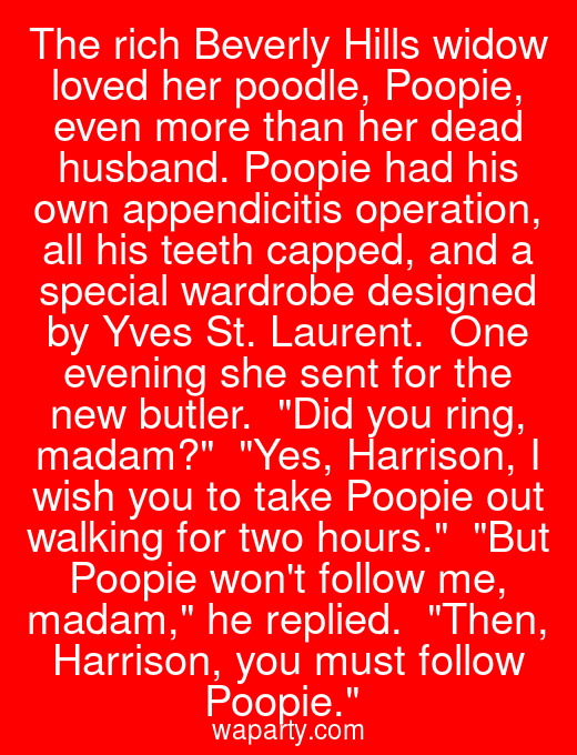 The rich Beverly Hills widow loved her poodle, Poopie, even more than her dead husband. Poopie had his own appendicitis operation, all his teeth capped, and a special wardrobe designed by Yves St. Laurent.  One evening she sent for the new butler.  Did you ring, madam?  Yes, Harrison, I wish you to take Poopie out walking for two hours.  But Poopie wont follow me, madam, he replied.  Then, Harrison, you must follow Poopie.