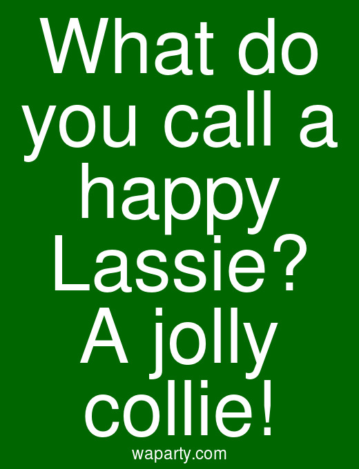 What do you call a happy Lassie? A jolly collie!