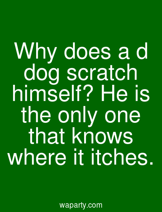Why does a d dog scratch himself? He is the only one that knows where it itches.